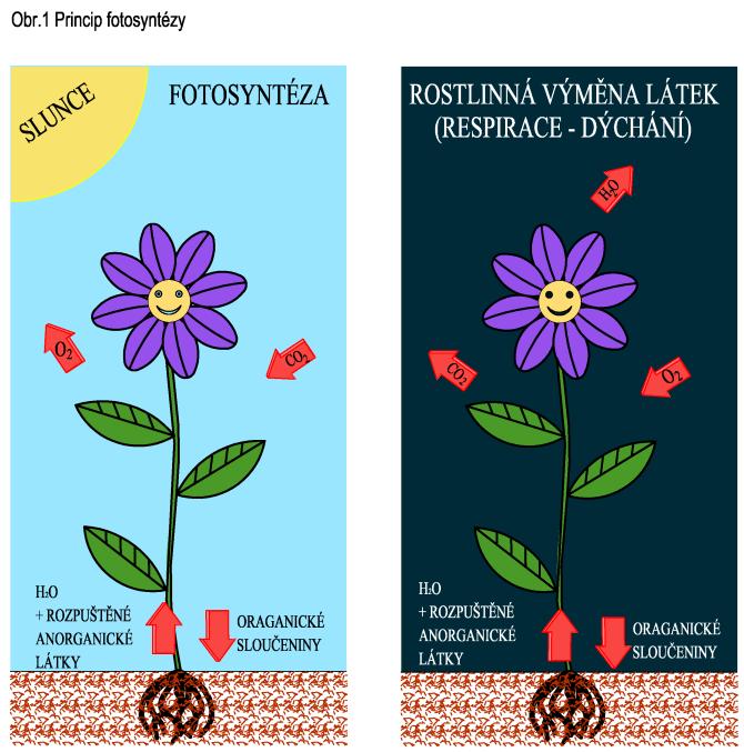 Princip fotosyntézy